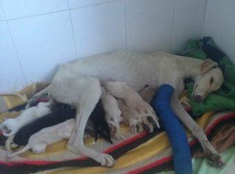 Поучительная история: 10 щенят могут гордиться такой отважной мамой!