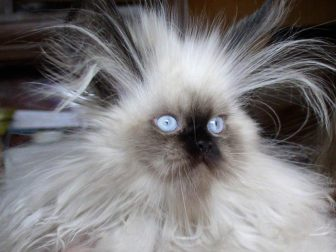 13-animals-having-a-bad-hair-day