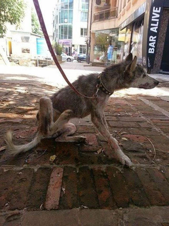 На асфальте лежал породистый пёс, скрывая под животом сокровище... Он почти ушёл на радугу, но вдруг!.. рис 4