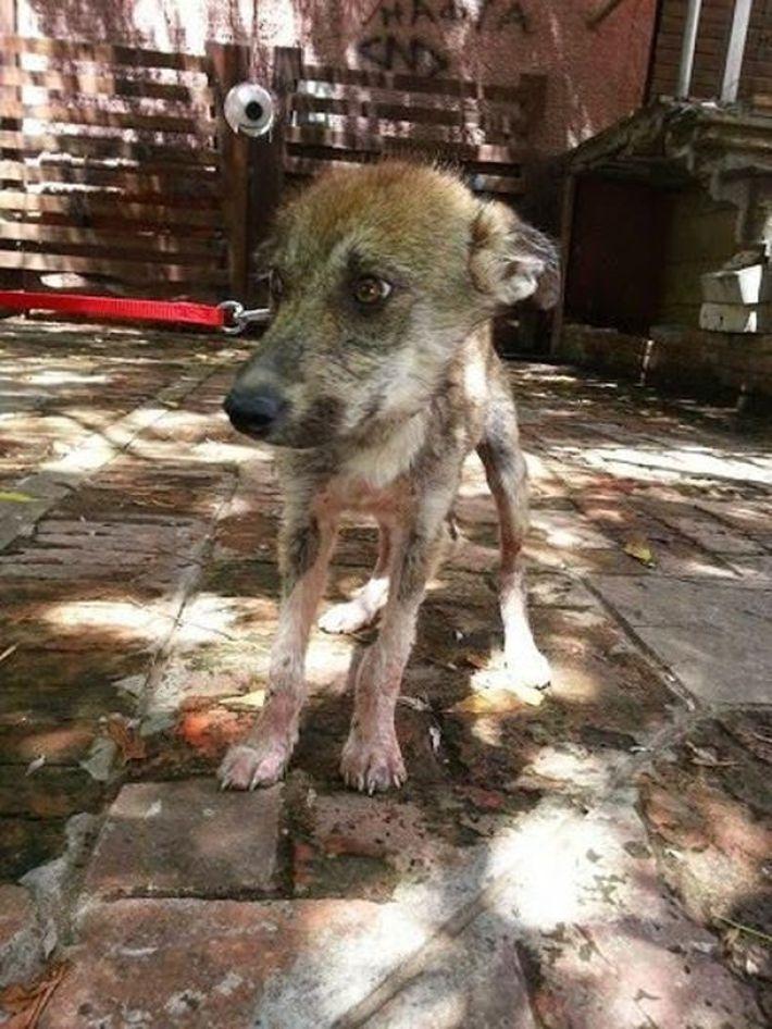 На асфальте лежал породистый пёс, скрывая под животом сокровище... Он почти ушёл на радугу, но вдруг!.. рис 6