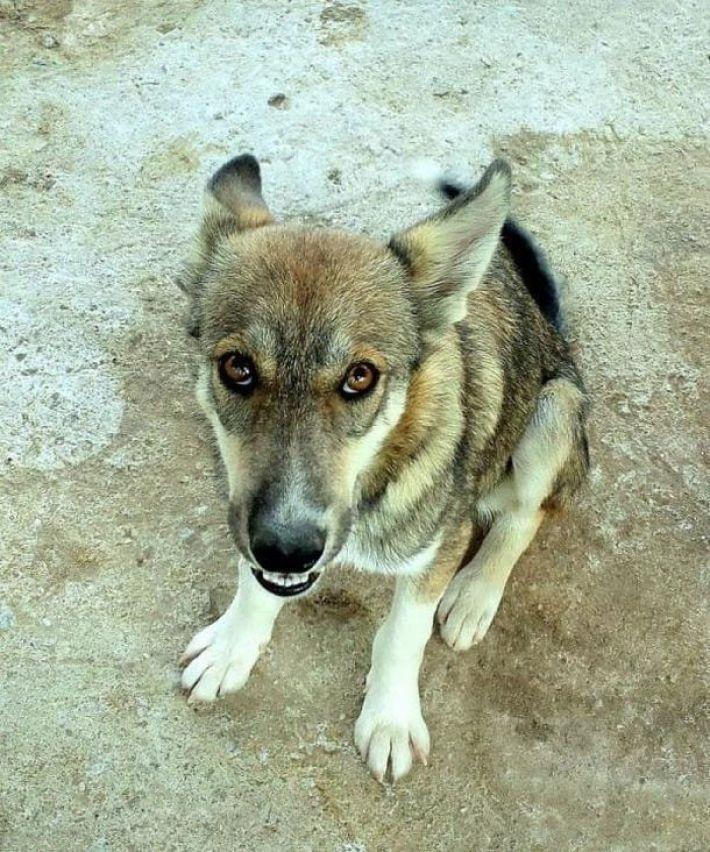 На асфальте лежал породистый пёс, скрывая под животом сокровище... Он почти ушёл на радугу, но вдруг!.. рис 7