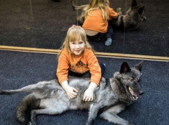 7-летняя девочка приручила волка… с помощью сосисок! Теперь она живёт с ним вместе :)