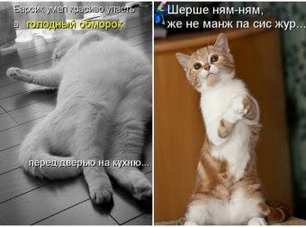 С приветом из соцсетей! Голодные котяры, которые требуют твоего внимания))