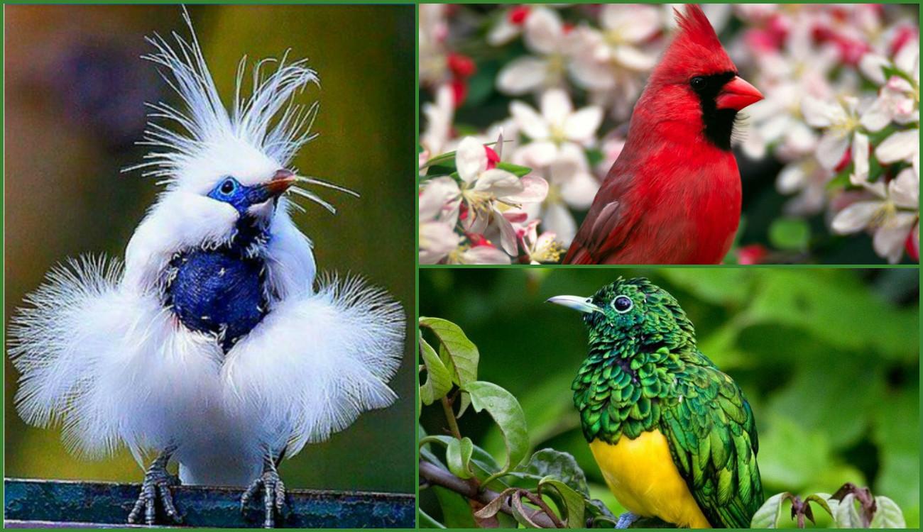 необычные птицы мира с описанием с картинками информации