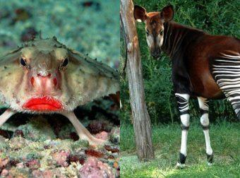 Фотошоп или реальность?! 18 животных, в существование которых сложно поверить…
