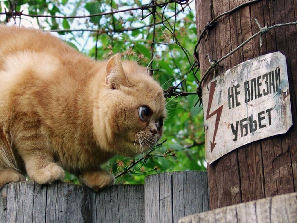 Этот парень в шоке - он не может погладить своего кота! На помощь пришёл весь интернет - и советуют начать... с трусов :)