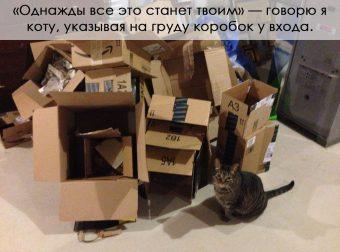 Коты и их хозяева! 15 забавных шуток о том, каково это — иметь в доме мурлыку))