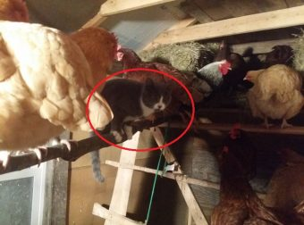 Мурлыки вездесущие! 20 фото о том, что котов можно найти где угодно))