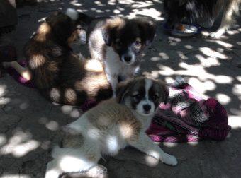 Мама Катюшка, папа Батон и щенки