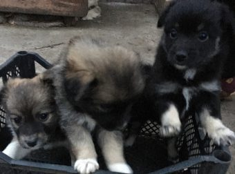 Три брата-акробата)