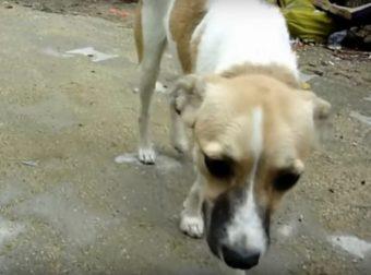 История жизни самой обыкновенной собаки Ани, которая ищет свой любящий дом!