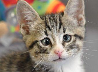 Чудесный кот Бам с необычными глазами :) Он покорит твоё сердце!