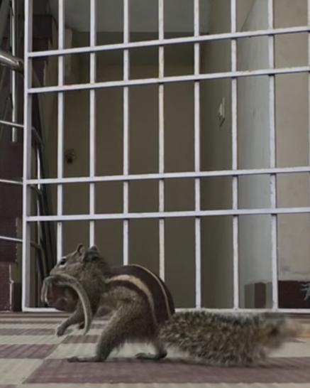 Ураган принёс в дом гнездо с бэби-бурундучками... Их спасала кошка, а потом... нашлась мама! рис 4