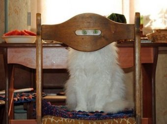 Коты 007 :) 20 доказательств того, что твой кот — секретный спецагент!!!