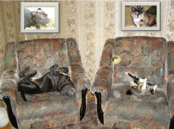 Нежный буль и семеро котят: история о классной собаке, которая нашла и вырастила сироток!