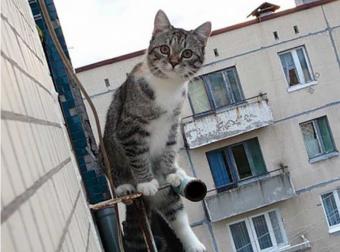 Спасая кота, мальчик упал с 5-го этажа… «Не бойтесь, дяденьки, я же сначала выкинул матрас!»