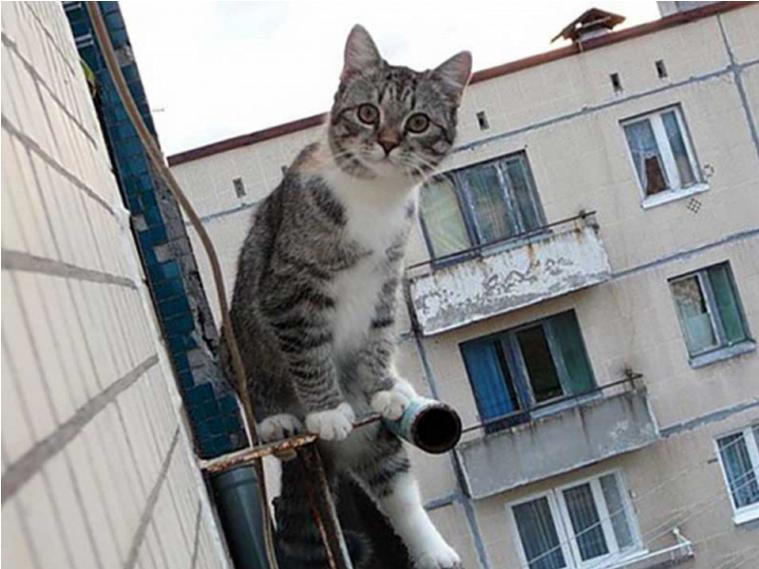 """Спасая кота, мальчик упал с 5-го этажа... """"Не бойтесь, дяденьки, я же сначала выкинул матрас!"""""""