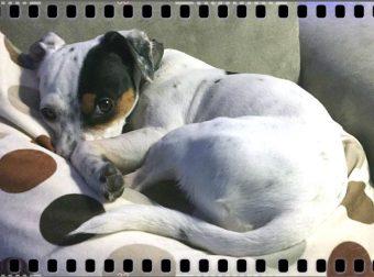 Собака долго «уговаривала» хозяина выйти на балкон… Она знала, что там лежит малышка, которую нужно вернуть к жизни!