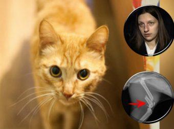 Кот, который возвращается… Многократно выброшенный зверь снова и снова приходит под дверь