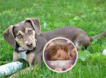 Петуния знает, что делать! Собака с «шестым чувством» спасла раздетую малышку, замерзавшую в поле