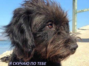 Отпуск на Крите у этой девушки чуть не стал шоком. Но случайная собака спасла её и… поделилась тайной!!