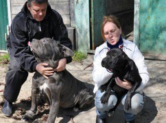 Однажды пёс спас мужчине жизнь и началось… Теперь его дом всегда открыт для одиноких собак!