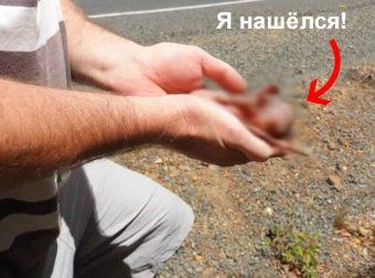 Бездыханное животное на дороге… Но постой-ка, у его животика спряталась живая Кроха!