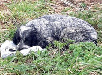 Мужчина спас плачущую собаку, сжимавшую зубами пакет… Заглянув внутрь, он и сам чуть не расплакался!