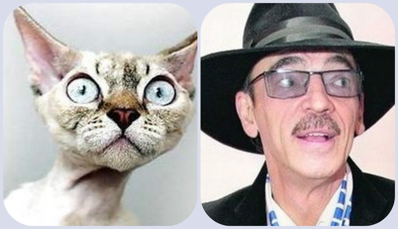 сходство кошек и животных фото признаюсь, хочу