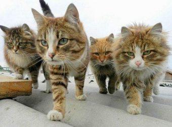 На страже хорошего настроения…)) Мурлыки, которые смогут развеселить любого! ;)