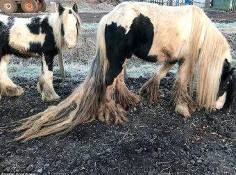Спасение жеребёнка и его мамы, брошенных посреди поля… Теперь их не узнать!!!