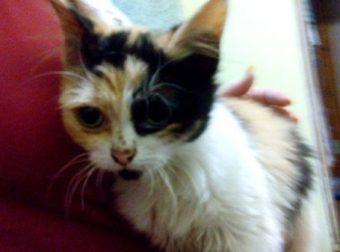 Целых три дня котёнок не отходил от миски с едой… Теперь Киса сытая и довольная! :)