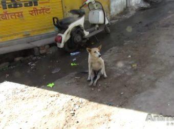 Так вот, почему этот странный пёс сидел на задних лапах… Здоровья тебе, малыш!