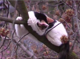 3 дня сидела на верхотуре кошка Котя, которую никто не хотел спасать. Помог московский альпинист!