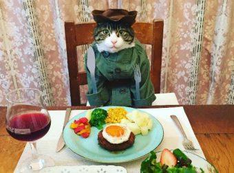 Знакомьтесь, кот Маро из Японии — настоящий эксперт блюд со всего мира!