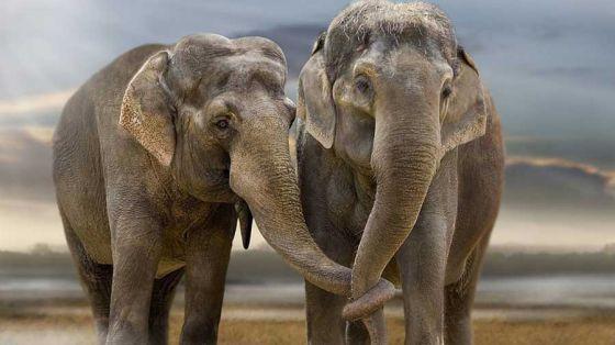 1487090915_elephant7