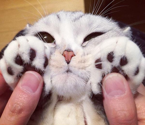 """Отключаем мимиметры, а то взорвутся!!! Японская кошка Хана с """"нарисованной"""" внешностью... влюблена!"""