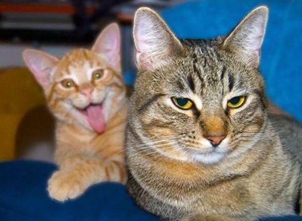 1491842477_cats-fotobomb-hoohma6