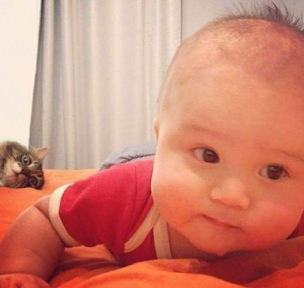 1491842567_cats-fotobomb-hoohma7
