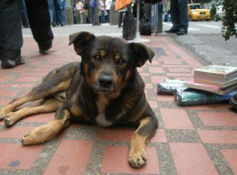 Жизнь — за питомца! В Мариуполе хозяин закрыл собаку от выстрелов собственным телом!!!