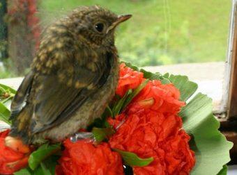Спасённый Птичик
