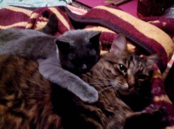 Кеша и Мышь