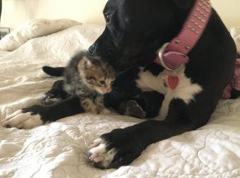 Добрейшая история спасения котёнка! Как домашние любимцы принимали нового собрата…)