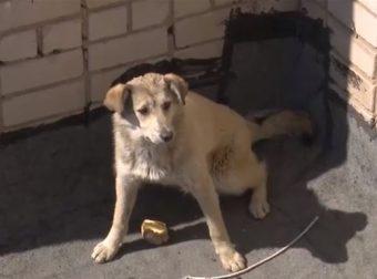 Собака — невидимка пугала жителей двора… Но наконец-то они поняли, что животное надо спасать!!