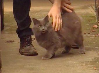 Парень спас кота, а кот спас парня! Закон возвращения ДОБРА работает на 100% :)