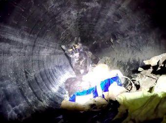 Машина ехала внутри сточной трубы и снимала видео! А там застряло сладкое семейство мурлык…