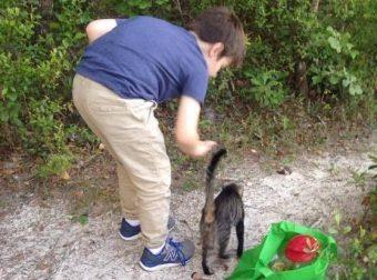 В тайном месте отец и сын накормили дикую кошку. В благодарность она принесла им… своих котят!
