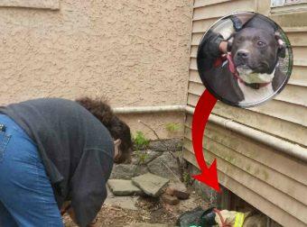 Собака погналась за сурком и нырнула под дом… Упс, приключение началось неожиданно! :)