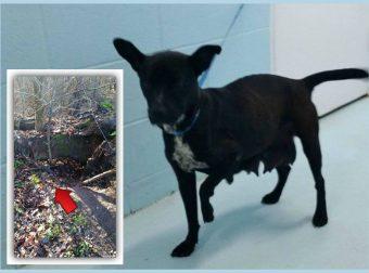 Умная собака Чудушка спаслась от пожара. На её животе спасатели увидели знак — она была ГЕРОЕМ!