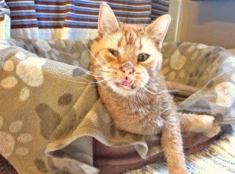 Жизнь прекрасна! Хозяева называли его «страшным», но на самом деле он кот-солнышко…